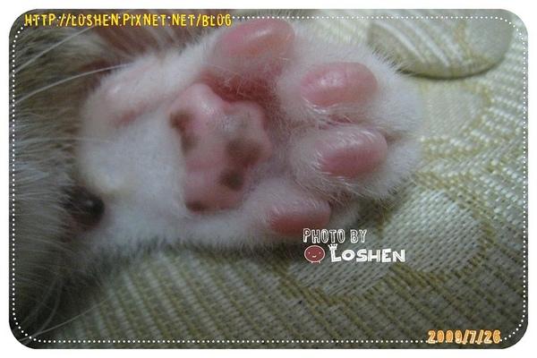 可愛的貓掌