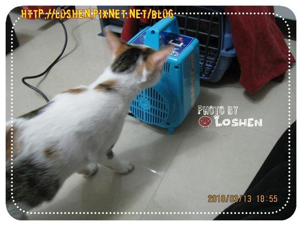 寵物烘毛機-貓咪真的不太怕