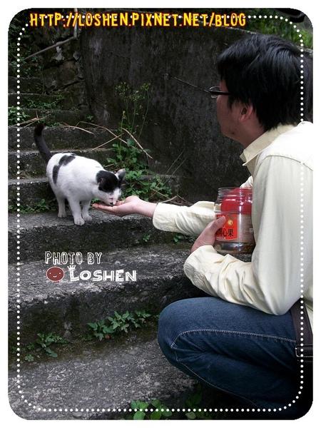 侯硐村-愛吃的貓