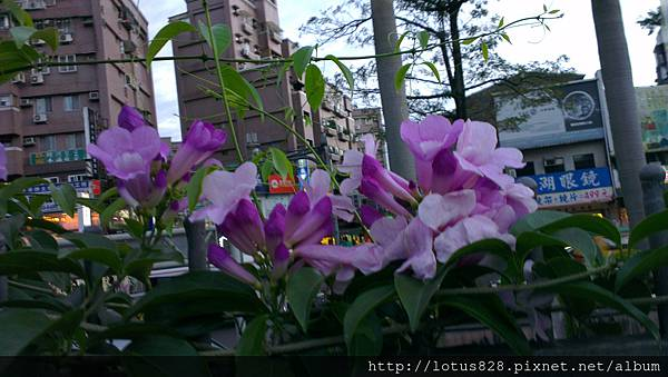 IMAG0733.jpg
