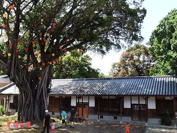 DSCF4143相機樹