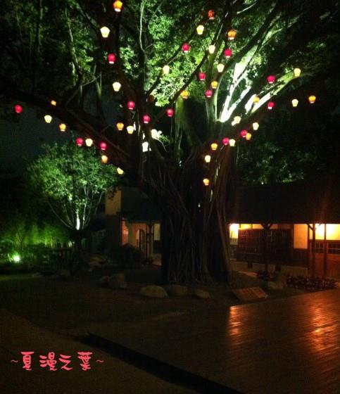 照片 010晚樹