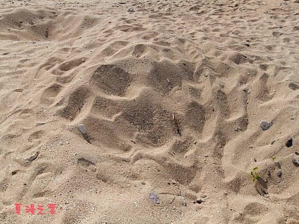 望安綠蠵龜