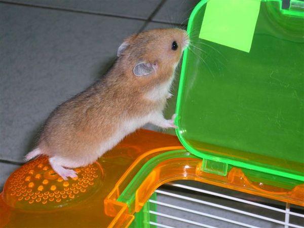 刺激1995鼠版XD