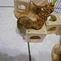 唉...笨鼠球...其實...
