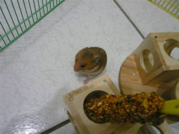 新玩具+新零食--積木+磨牙蜂蜜穀物棒^O^