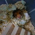 不行了~整只鼠陷在裡面的樣子太可愛了>///<