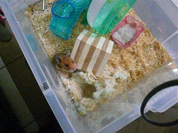 鼠球仔細觀察後下了結論