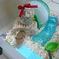 鼠球~快看!!禮物在屋頂囉~