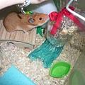 黃鼠球:這是啥米東西?嗅~~~