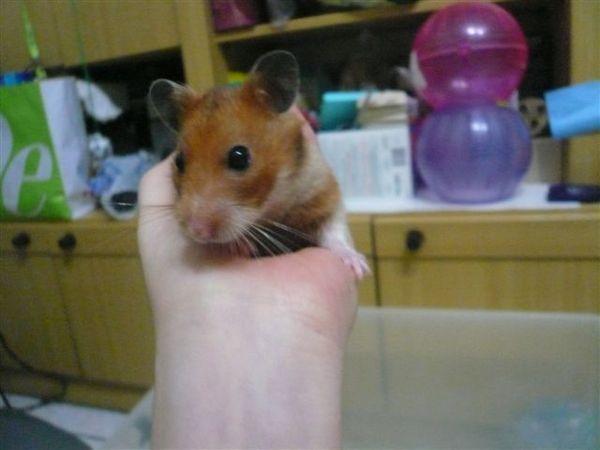 可愛的鼠鼠小朋友