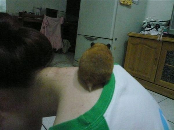 結紮第3天,我的脖子,她的跑道XD