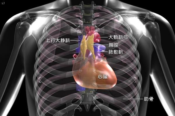 胸腺肽是什麼.jpg
