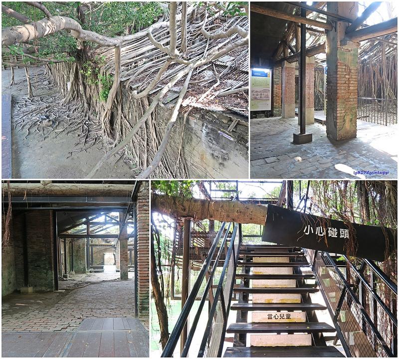 tainan台南一日遊-樹屋-綠色隧道-台江公園-17度環島隨拍 (12)