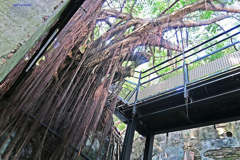 tainan台南一日遊-樹屋-綠色隧道-台江公園-17度環島隨拍 (16)