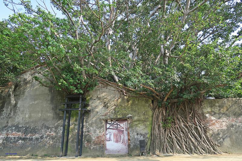 tainan台南一日遊-樹屋-綠色隧道-台江公園-17度環島隨拍 (20)