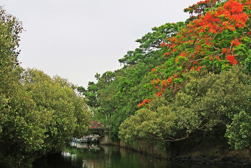 tainan台南一日遊-樹屋-綠色隧道-台江公園-17度環島隨拍 (32)