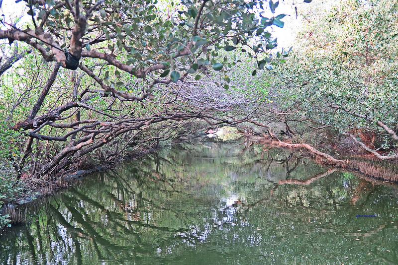 tainan台南一日遊-樹屋-綠色隧道-台江公園-17度環島隨拍 (25)