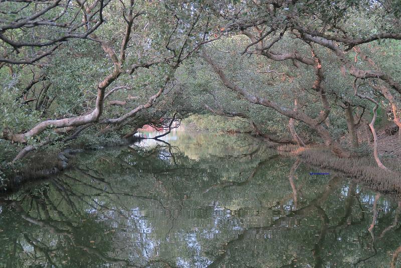 tainan台南一日遊-樹屋-綠色隧道-台江公園-17度環島隨拍 (26)