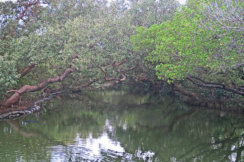 tainan台南一日遊-樹屋-綠色隧道-台江公園-17度環島隨拍 (27)
