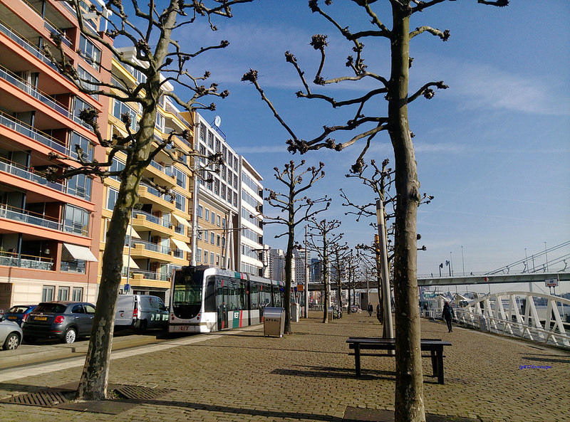 travel-Netherlands-Rotterdam-Kinderdijk-BLOG-17docintaipei (5)