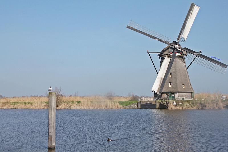 travel-Netherlands-Rotterdam-Kinderdijk-BLOG-17docintaipei (24)
