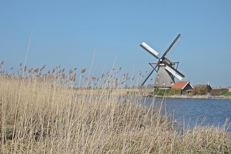 travel-Netherlands-Rotterdam-Kinderdijk-BLOG-17docintaipei (25)