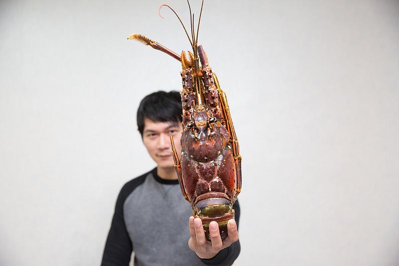 加勒比海野生大龍蝦-龍蝦美食-17度c隨拍 (3)