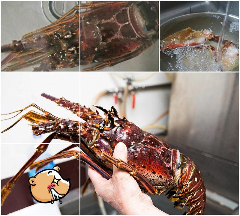 加勒比海野生大龍蝦-龍蝦美食-17度c隨拍 (5)