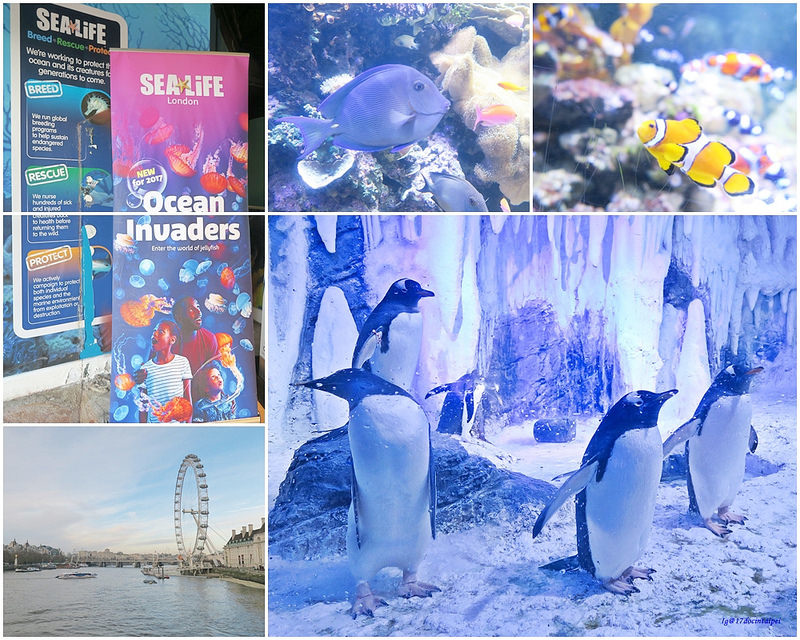 SEALIFELondon Aquarium-KLOOK客路-17docintaipei (1)