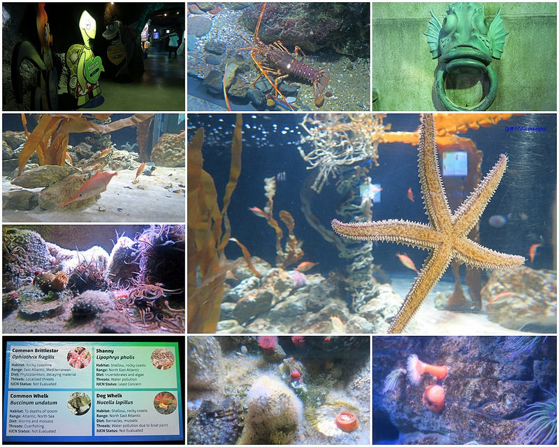 SEALIFELondon Aquarium-KLOOK客路-17docintaipei (6)