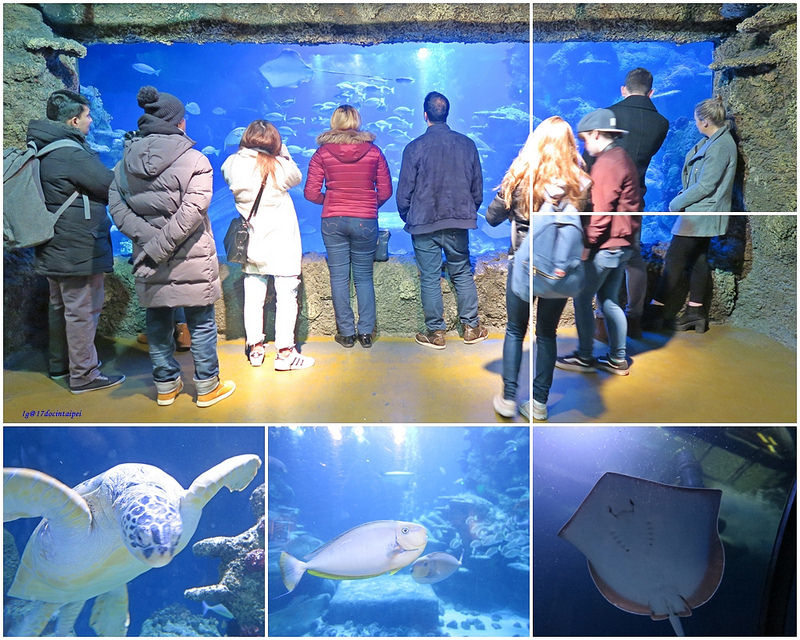 SEALIFELondon Aquarium-KLOOK客路-17docintaipei (12)