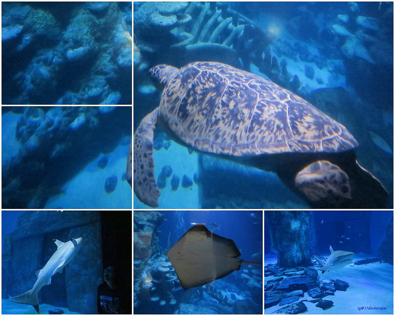 SEALIFELondon Aquarium-KLOOK客路-17docintaipei (13)
