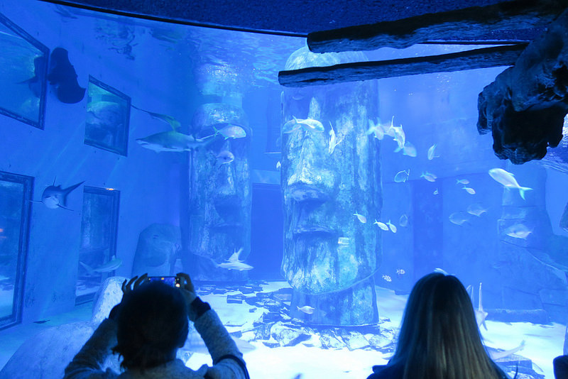 SEALIFELondon Aquarium-KLOOK客路-17docintaipei (14)