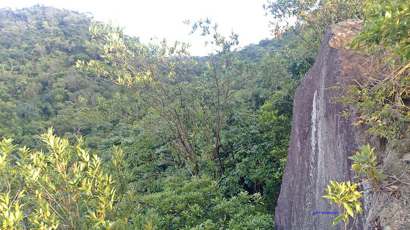 TAIPEI-bush walking-台北郊山健行-內湖金面山剪刀石-17度C隨拍 (7)