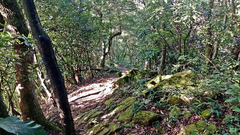 TAIPEI-bush walking-台北郊山健行-內湖金面山剪刀石-17度C隨拍 (35)