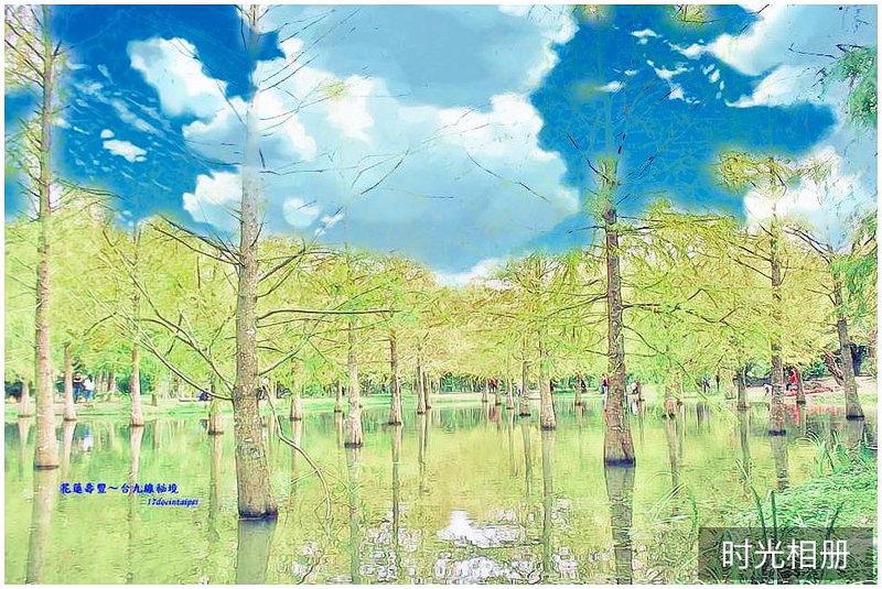 花蓮-台九線秘境-壽豐鄉落羽松-17docintaipei (33)