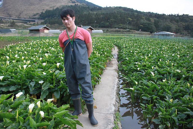 竹子湖採海芋-17度C隨拍 (28)