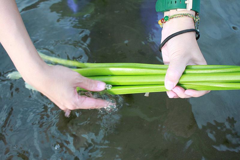 竹子湖採海芋-17度C隨拍 (63)