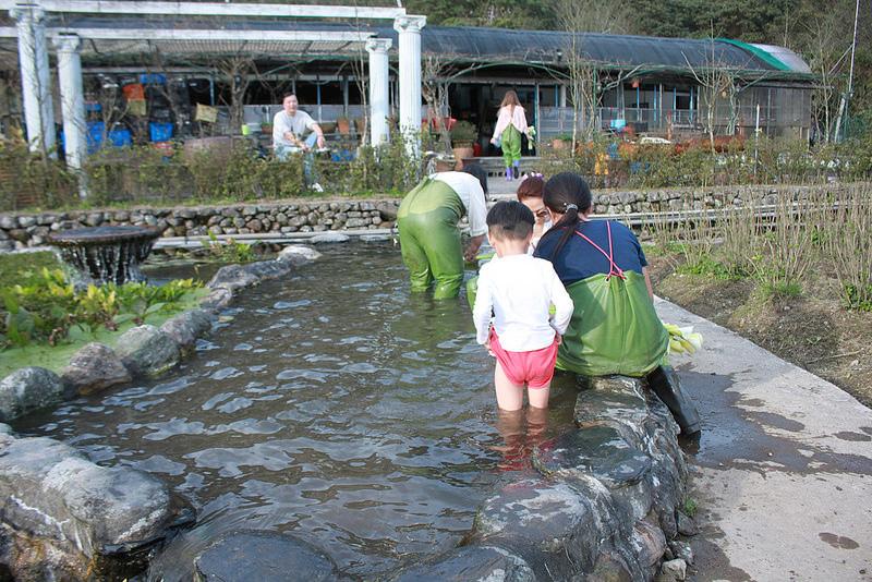 竹子湖採海芋-17度C隨拍 (64)