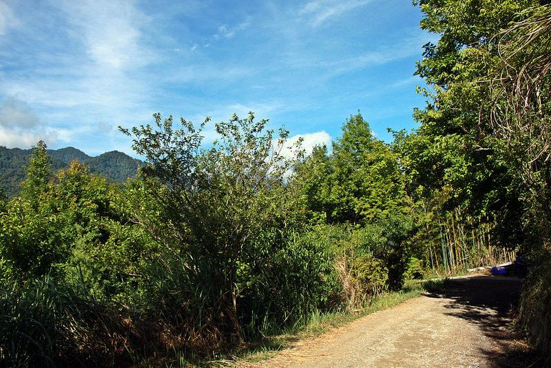 環島-新竹上帝部落-司馬庫斯隨拍 (56)