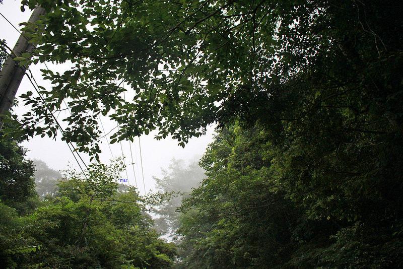 環島。前網上地部落道路-竹60-司馬庫斯產業道路 (22)