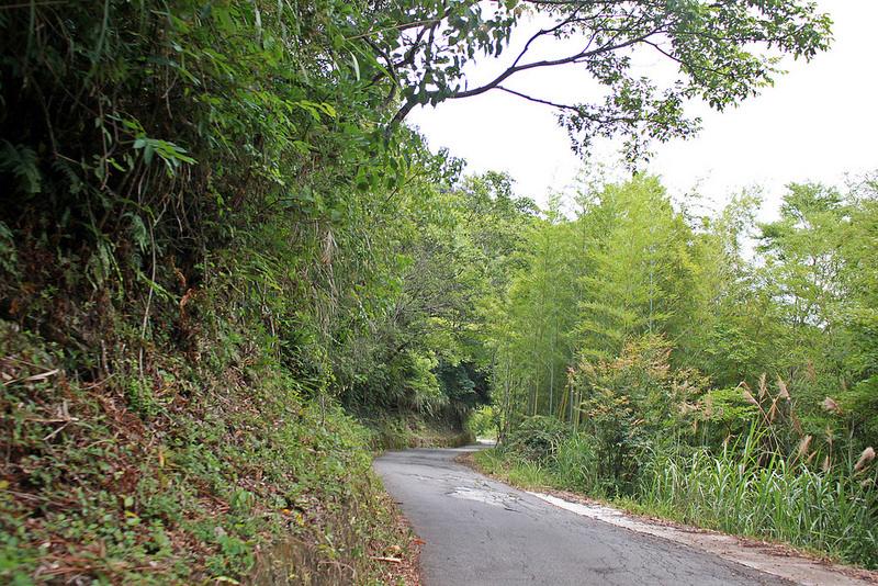 環島。前網上地部落道路-竹60-司馬庫斯產業道路 (90)