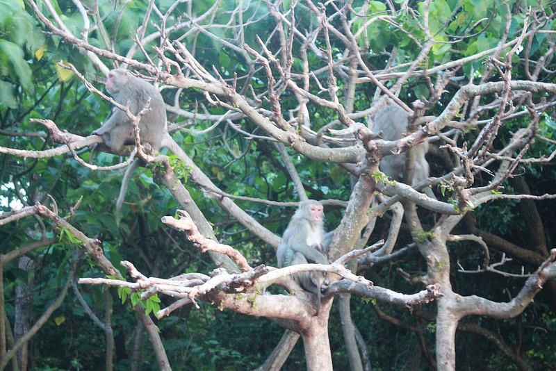 環島-西子灣-夕陽與猴子共舞 (46)