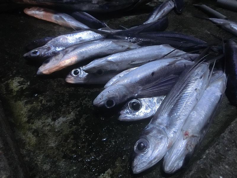17度C環島-蘭嶼飛魚季體驗- (41)