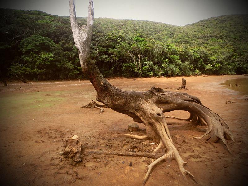 17度C隨拍-祕境介紹-台灣蘭嶼-天池 (37)
