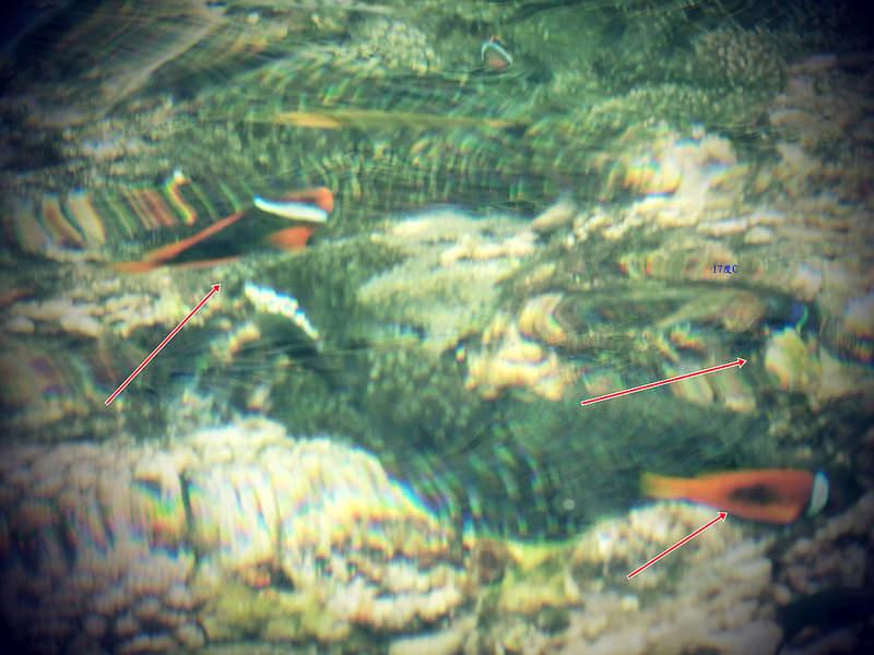 蘭嶼浮潛-環島景點-17度c隨拍 (25)