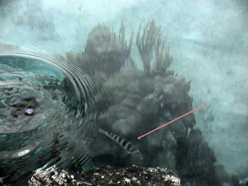 蘭嶼浮潛-環島景點-17度c隨拍 (17)