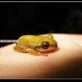 我家的小蛙.jpg