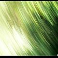 草中的移動.jpg
